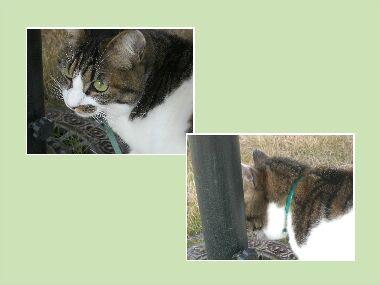 ボクの猫草.jpg
