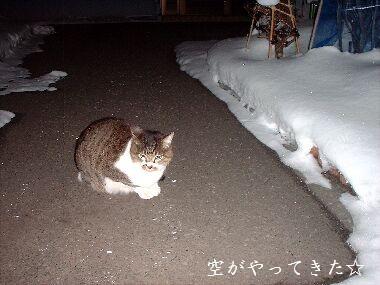 雪道パトロールのセシルくん.jpg